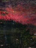 Hommage to Monet (2006)