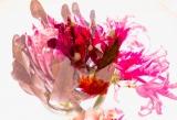 Protea 2019.jpg