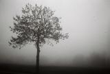 16 Der Baum.jpg