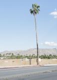palmtree_SonjaHerpich_klein.jpg