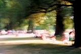 Sommer _ Summer 3-1.jpg