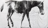 1878. The Horse in motion_Study n01.jpg
