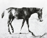1878_The horse in motion.jpg